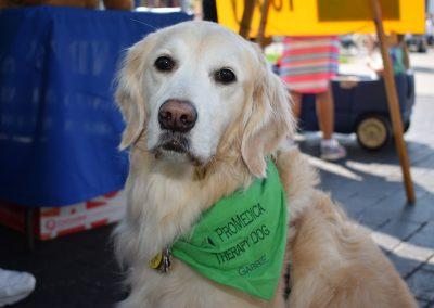 Gabbie-therapy dog